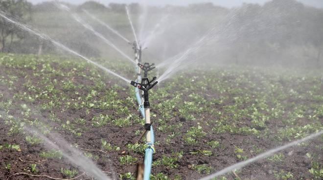 Irrigazione agricoltura