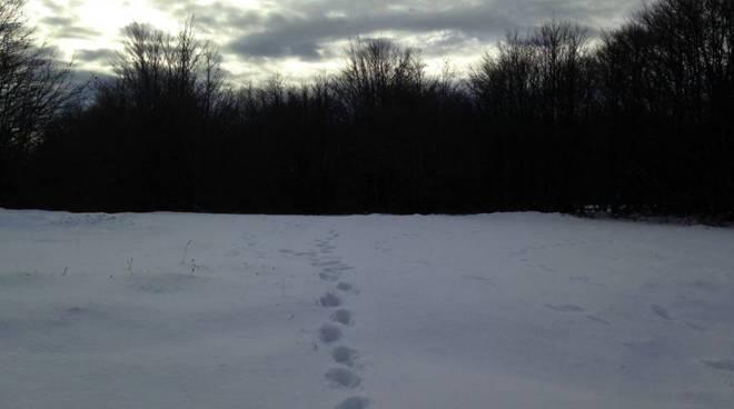 Neve in arrivo in pianura e collina previsioni