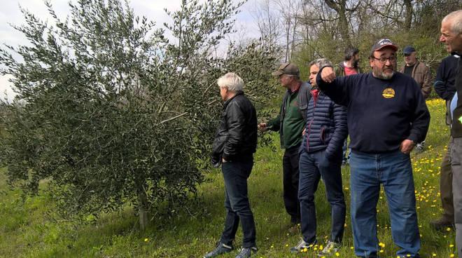 La visita all'oliveto
