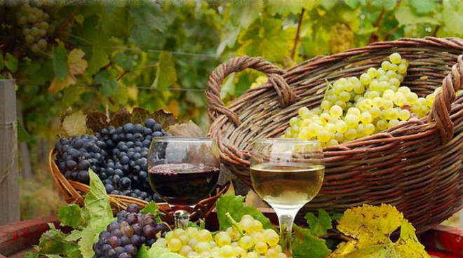 Vigneto vino