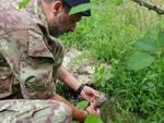 La bomba a mano ritrovata a Travo