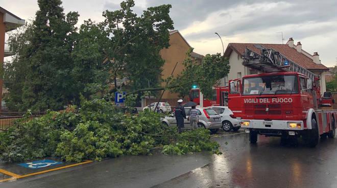 Albero caduto a Barriera Torino