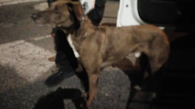 Il cane salvato in via Manfredi