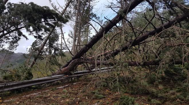 Maltempo e vento in Provincia