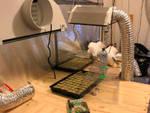 Il laboratorio per la produzione di marijuana scoperto dai carabinieri