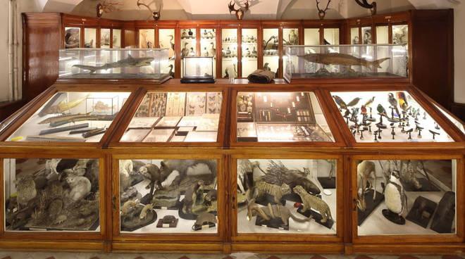 Museo Alberoni