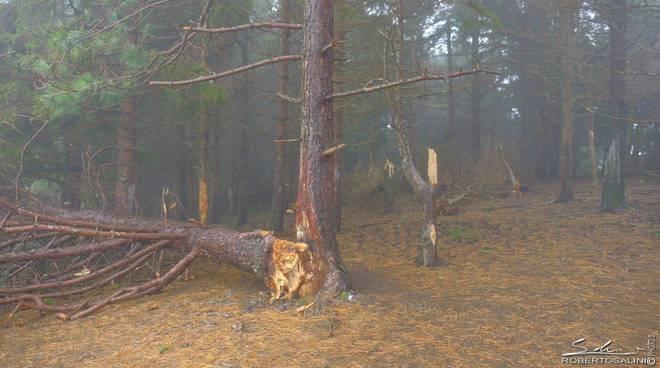 pineta Aserei devastata dal vento
