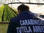 Carabinieri tutela ambiente (foto carabinieri.it)