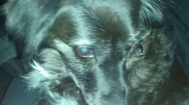 cane salvato dai Metronotte
