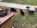 I gatti al gattile comunale