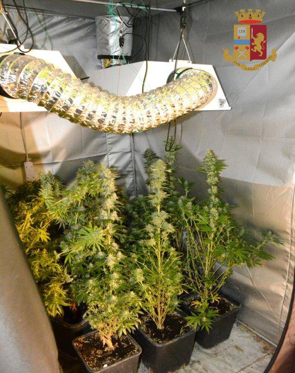 serra di marijuana in casa polizia