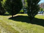 Sfalcio erba alla Besurica
