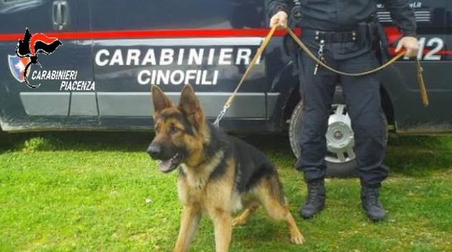 cane unità cinofila