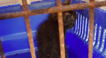 Il gattino salvato a Gossolengo
