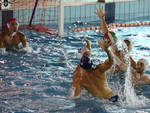 Everest Piacenza Pallanuoto