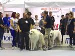Pets Festival