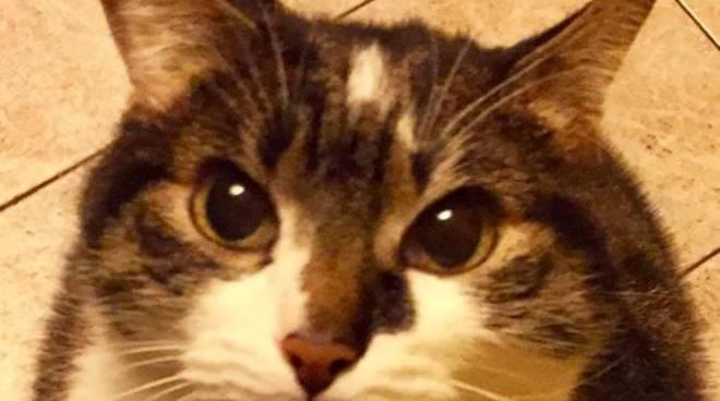 Il gatto Arturo