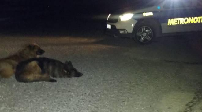 Cani recuperati da Metronotte
