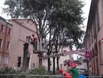 taglio piante Fiorenzuola