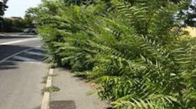 segnali coperti dalle piante