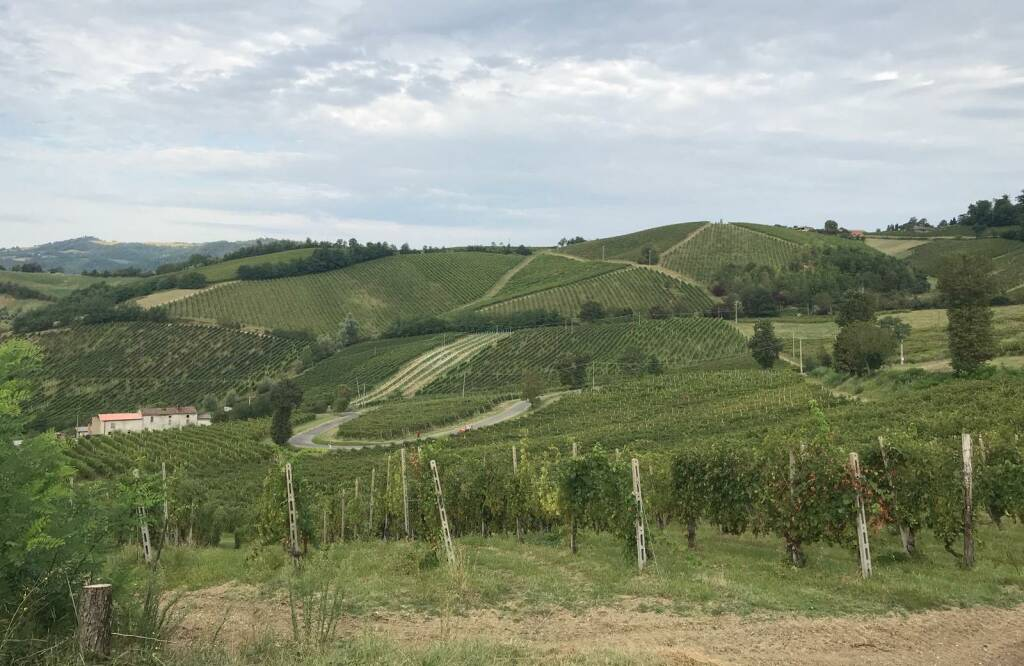 Vendemmia 2019 in Val Tidone