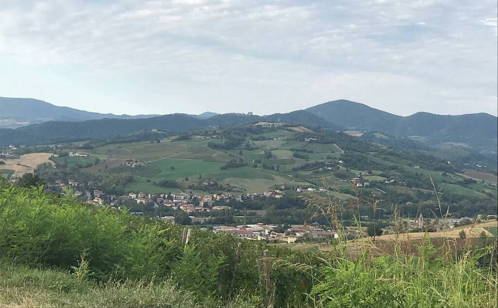 Vendemmia 2019 in Val Tidone