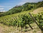 Vin santo Vigoleno