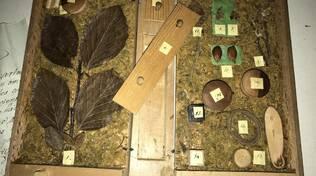 """Mostra """"Alberi di carta, libri di legno"""""""