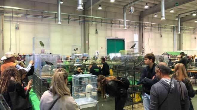 PetsFestival a Piacenza Expo 2019