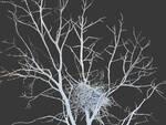 Romano Bertuzzi - L'ultimo albero