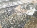 L'incidente ferroviario a Piacenza