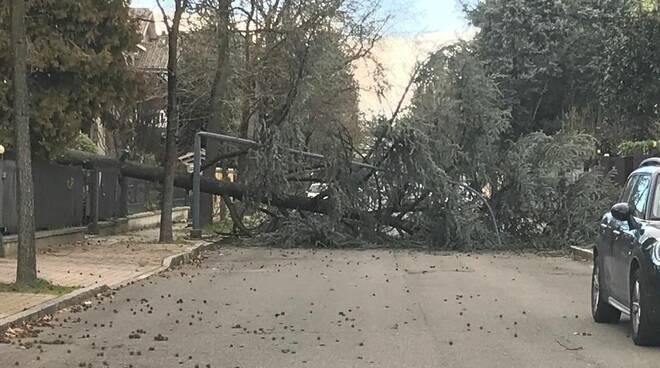 albero crolla alla Besurica
