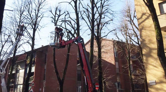 Potatura alberi in città