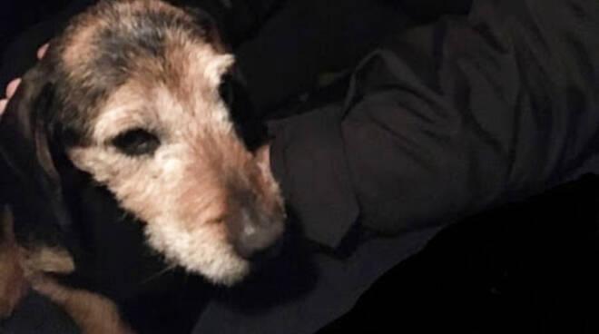 Il cane soccorso dalla guardia giurata di Metronotte Piacenza