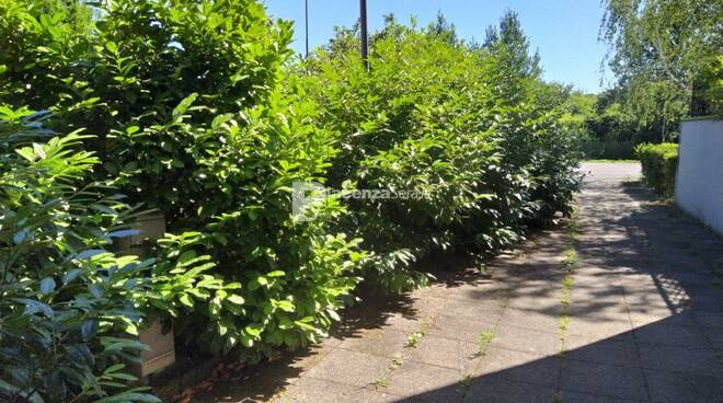 Segnalazione mancata manutenzione verde pubblico