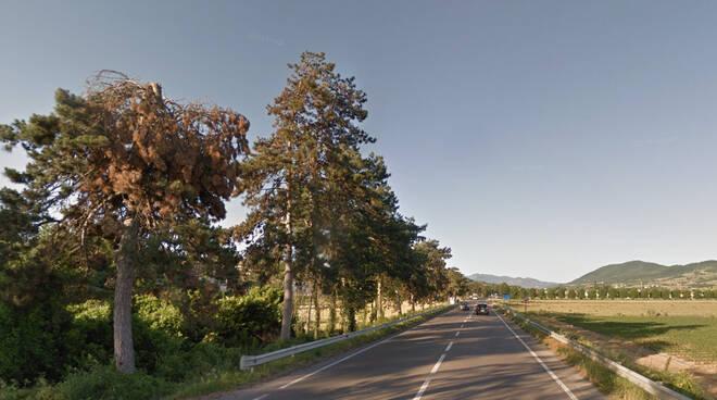 Pini lungo la statale 45 (foto google Maps)