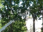 Potatura alberi Facsal