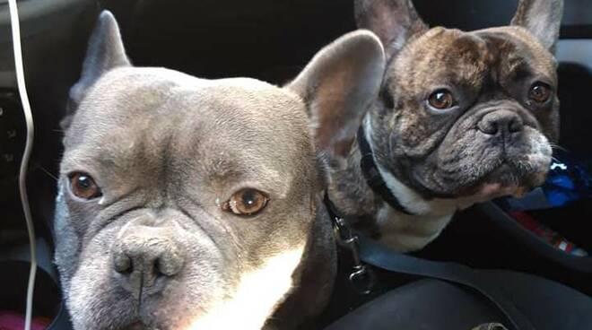 Vasco e Bat