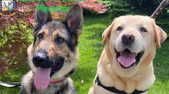I cani della Finanza Buddy e Helly