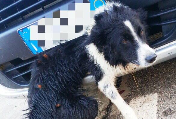 cane ferito enpa
