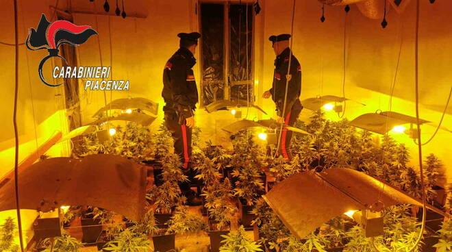 serra marijuana carabinieri