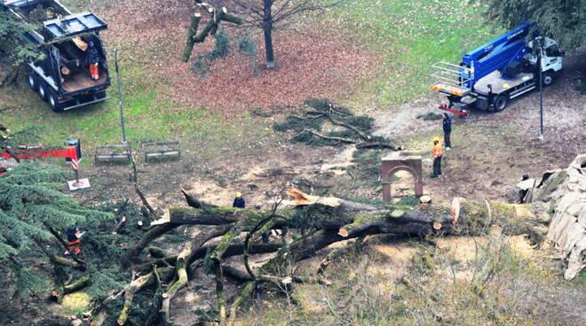 Grande cedro rimozione