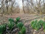 bosco Fornace vecchia