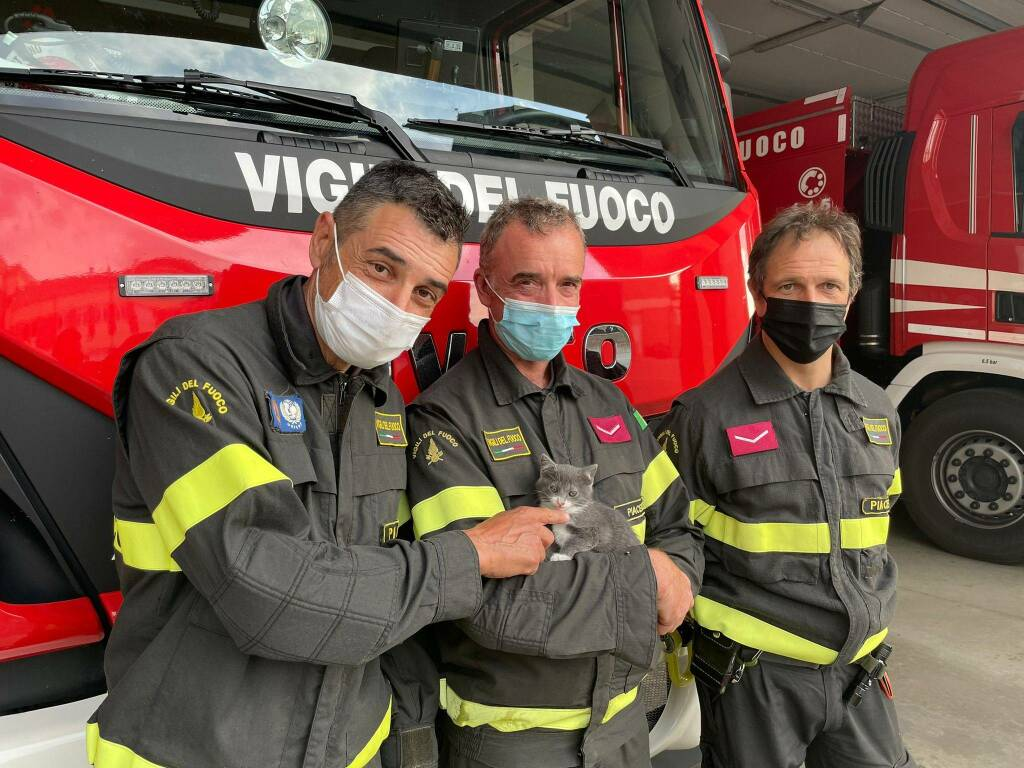 micino salvato dai vigili del fuoco