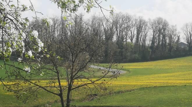 primavera a Gusano