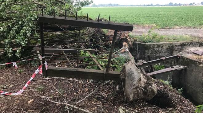 albero caduto strada Malchiodi