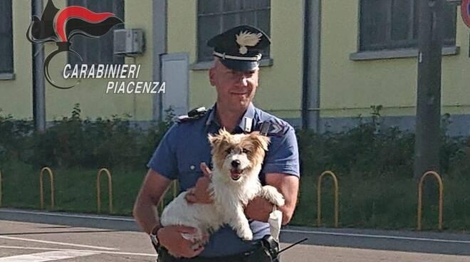 carabinieri cagnolino
